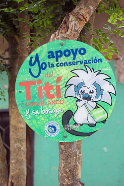 Cotton-top Tamarin (Saguinus oedipus) sign for conservation project, Proyecto Titi, Colombia