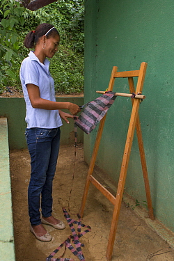 Cotton-top Tamarin (Saguinus oedipus) conservationist making eco-mochil bag, traditional style bags made out of littered plastic bags, which are then sold to tourists to raise money for tamarin conser...