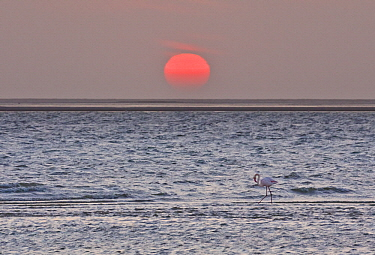 Sun setting over ocean, Walvis Bay, Namibia