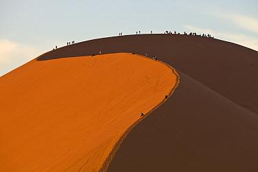 Tourists hiking on tall sand dune, Sossusvlei, Namib-Naukluft National Park, Namibia
