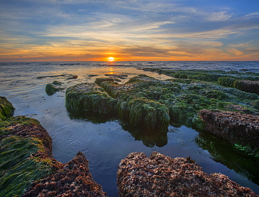 Kelp along intertidal zone at low tide at sunset, La Jolla Cove, San Diego, California