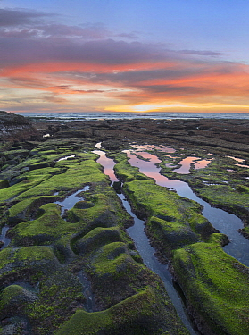 Intertidal zone at low tide at sunset, La Jolla Cove, San Diego, California