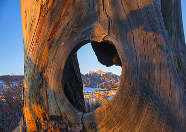 Mount Herard framed by tree hole, Great Sand Dunes National Park, Colorado