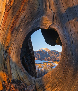 Mount Herard framed by hole in tree, Great Sand Dunes National Park, Colorado