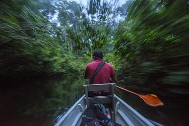 Guide paddling canoe through forest, Amazon, Ecuador