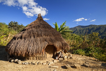 Traditional straw hut, Gunung Mutis Nature Reserve, Indonesia