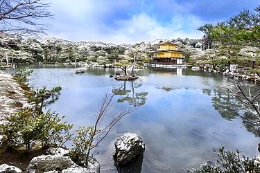 Buddhist temple in winter, Kinkaku-ji Temple, Japan