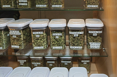 Marijuana (Cannabis sativa) hybrid buds for sale at dispensary, Denver, Colorado