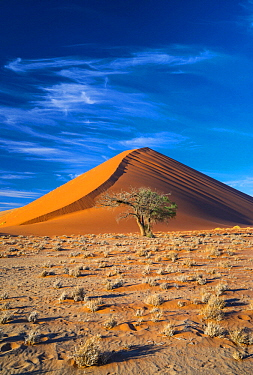 Tree and sand dune, Namib-Naukluft National Park, Namibia