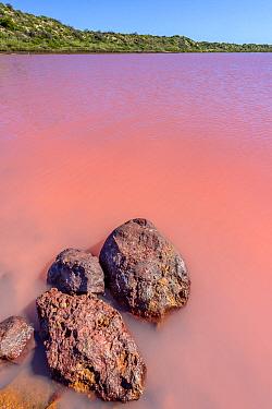 Pink Lake with pink color due to cyanobacterium (Haloarchaea cutirubrum) and algae (Dunalella sailina) that produce protecitve pigments against UV damage, Kalbarri, Western Australia, Australia