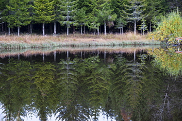 Trees reflected in water,  Lake La Colombiere, Auvergne, France
