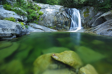 Mountain stream with small waterfall, Zicavo, Corsica, France
