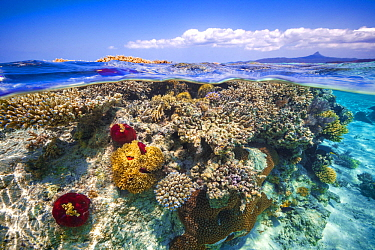 Coral reef in Mayotte Lagoon with Mount Choungi in the background, Indian Ocean