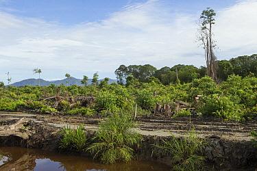 Clearcut forest area, Sumatra, Indonesia