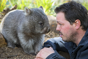Common Wombat (Vombatus ursinus) orphan with sanctuary director, Greg Irons, Bonorong Wildlife Sanctuary, Tasmania, Australia