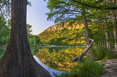 Bald Cypress (Taxodium distichum) trees along river, Frio River, Old Baldy Mountain, Garner State Park, Texas