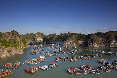 Floating houses with nets to farm fish, Ha Long Bay, Cat Ba Island, Vietnam