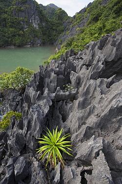 Karst formation, Ha Long Bay, Cat Ba Island, Vietnam