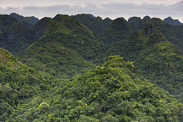 Rainforest covering hillsides, Ha Long Bay, Cat Ba Island, Vietnam