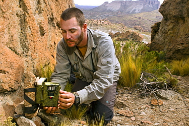Andean Mountain Cat (Leopardus jacobita) biologist, Juan Reppucci, checking camera trap, Abra Granada, Andes, northwestern Argentina