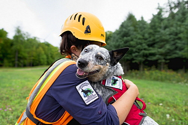 Domestic Dog (Canis familiaris) named Zilly, a scent detection dog with Conservation Canines, being hugged by her handler during wind farm inspection, New York