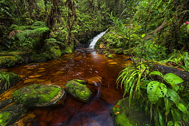 Creek in rainforest, Guacharo Cave National Park, Colombia