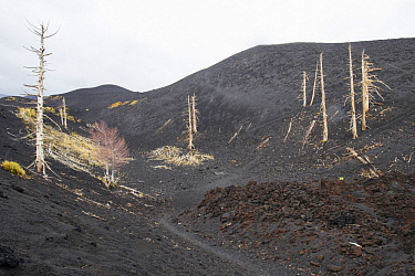 Recent lava fields with burnt trees on the east side of Mount Etna, Sicily, Italy