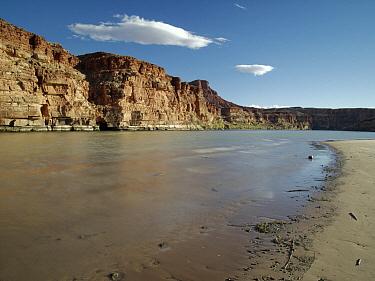 Colorado River at Lee's Ferry, Glen Canyon National Recreation Area, Arizona
