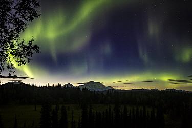 Northern lights above Mount Denali, Alaska