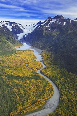 Taiga and glacial river below retreating Wosnesenski Glacier, Kachemak Bay State Park, Alaska