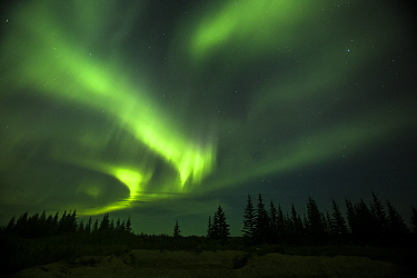 Northern lights above taiga, Denali National Park, Alaska