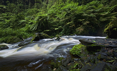 Creek in rainforest, Nyungwe Forest, Rwanda
