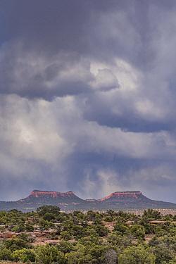 Storm over bears ears mesas, Cedar Mesa, Bears Ears National Monument, Utah