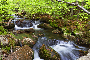 Creek in forest, Bavarian Forest National Park, Lower Bavaria, Germany