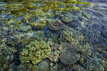 Shallow coral reef, Ceram Island, Banda Sea, Indonesia