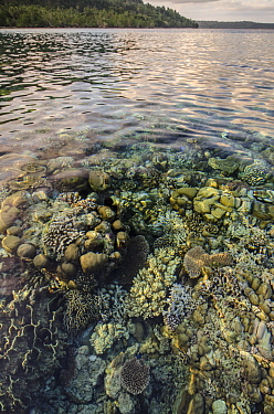 Shallow coral reef, Ceram Island, Banda Sea, Indonesia