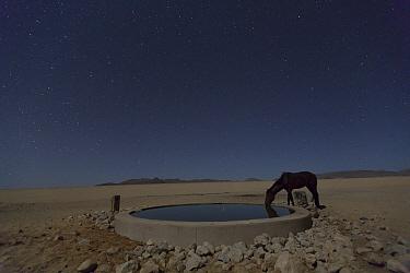 Namib Desert Horse (Equus caballus) drinking in desert at watering trough at night, Namib-Naukluft National Park, Namibia