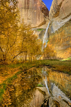 Trees in fall near Calf Creek Falls, Grand Staircase-Escalante National Monument, Utah