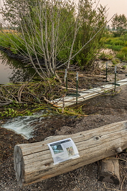 Beaver management tool, used to control water level behind dam, and not flood nearby road, Grand Teton National Park, Wyoming