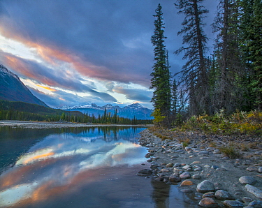 Coniferous trees on lakeshore, Moberly Flats, De Smet Range, Rocky Mountains, Jasper National Park, Alberta, Canada