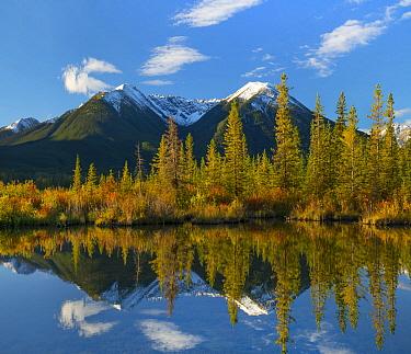 Taiga and peaks, Sundance Range, Vermilion Lakes, Banff National Park, Alberta, Canada