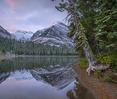 Mount Helen from Two Medicine Lake, Glacier National Park, Montana