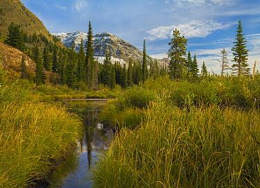 Marsh, Two Medicine Lake, Glacier National Park, Montana
