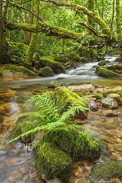 Stream in forest, Galicia, Spain
