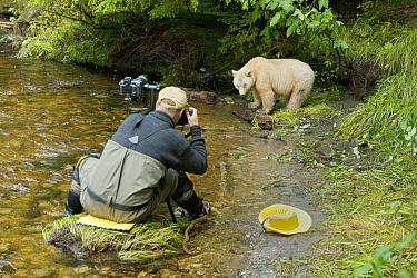 Kermode Bear (Ursus americanus kermodei), white morph called spirit bear and photographer, northern British Columbia, Canada