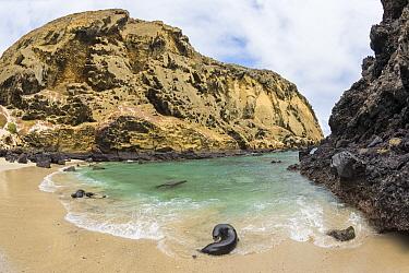 Galapagos Sea Lion (Zalophus wollebaeki) in cove, Bainbridge Rocks, Santiago Island, Galapagos Islands, Ecuador
