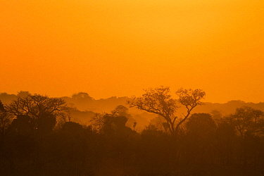 Miombo woodland at sunrise, Kafue National Park, Zambia