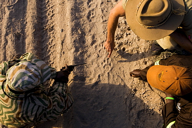 African Lion (Panthera leo) trackers, Timbo Frackson and Christopher Muduwa, with biologist Jake Overton, looking at female lion tracks during transect, Kafue National Park, Zambia