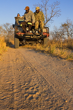 African Lion (Panthera leo) trackers, Christopher Muduwa and Timbo Frackson, looking at female lion tracks during transect, with biologist, Xia Stevens, looking for herbivores, Kafue National Park, Za...