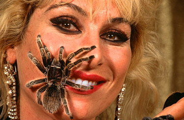 Tarantula (Theraphosidae) on circus performer's face, Germany